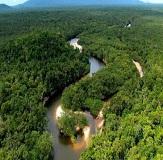 <b>Selva Amazônica</b> (03 noites)